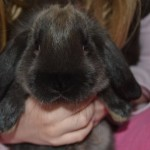 Skrubby-the-bunny-Mama-Luvs-Books