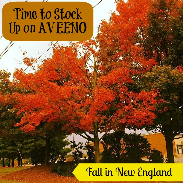 Fall in New England Mean Stocking Up on AVEENO