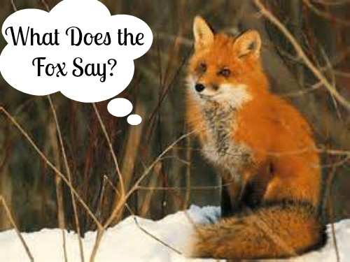 What Does the Fox Say? Could this be Educational? via Mama Luvs Books