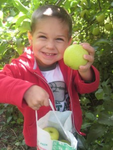 Narrow Lane Orchard RI